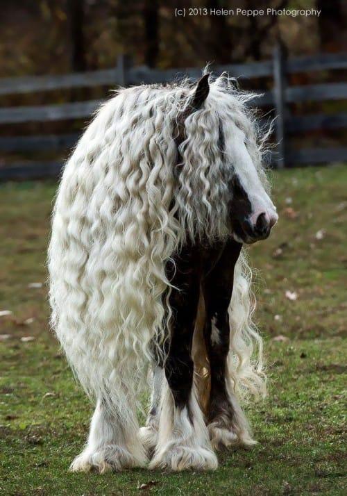 blondehorse