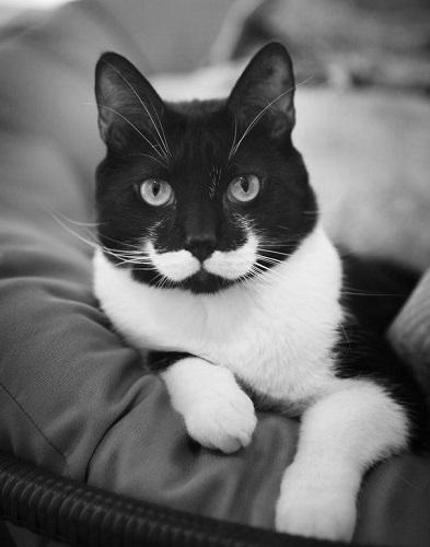 catwithmoustache1